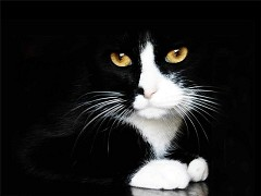 blackcat-person